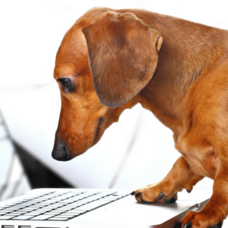 dachsund and laptop
