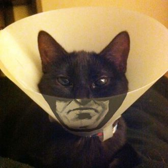 Cat wearing Elizabethan collar